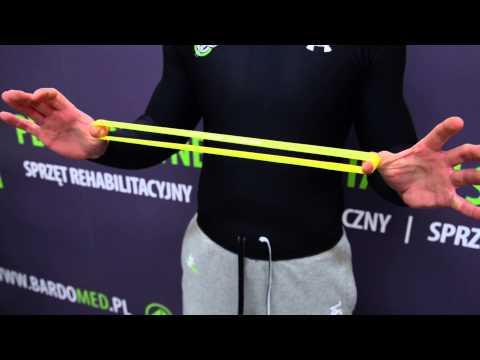 Główne mięśnie i stawy
