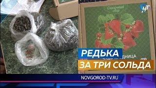 Новгородских пенсионеров обманули интернет-продавцы чудо-ягодниц