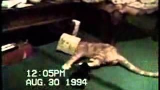 Забавное видео про кошек