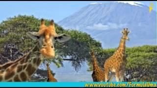Зачем тигру полоски, а жирафу пятна? (что такое мимикрия) развивающие мультфильмы