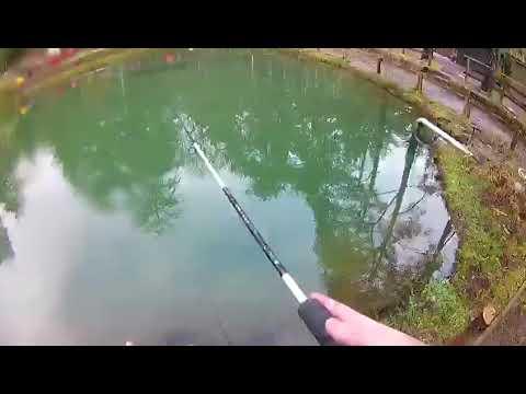 Lorzo di perla come cucinare YouTube per pesca