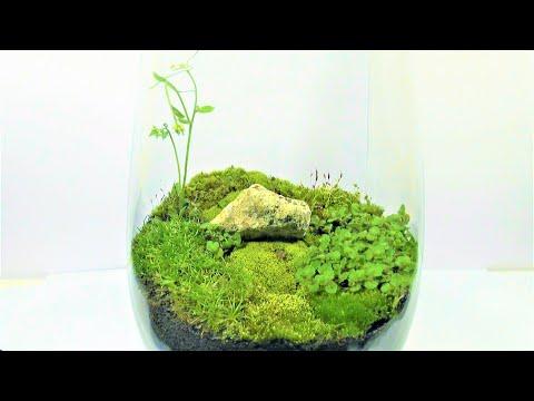 DIY - Rocky Hill in a Vase - Eternal Green Terrarium