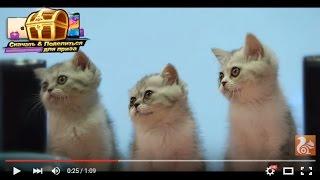 Эксперимент: как животные попытаются исследовать интернет?