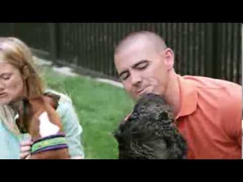 Kansas City's Dog Training And Behavior Specialists