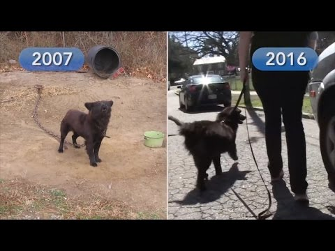 Dog Chained Outside For 9 Years Finally Gets A Forever Home