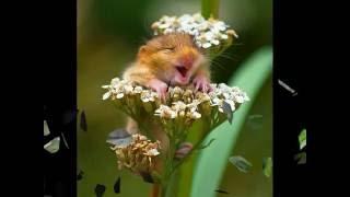 Животные умеют улыбаться. Доказано | Smile animals. Proof