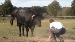 Un taureau de corrida a t-il des sentiments ?