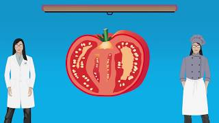 DEMYSTIFIED: Are tomatoes a fruit or a vegetable? | Encyclopaedia Britannica