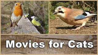 Movies for Cats to Watch Birds - The Ultimate Movie & Video for Your Cat