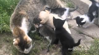 Puppy: i need your milk! / Щенок хочет молока - Video Youtube