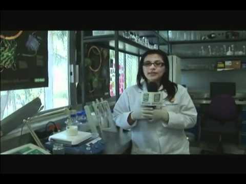 Harinas precocidas para la elaboración de bebidas de alto valor nutricional-nutracéutico