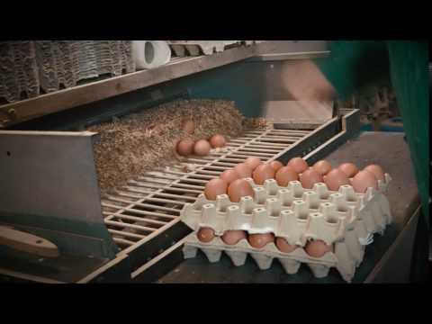 Freilandhaltung - Eier