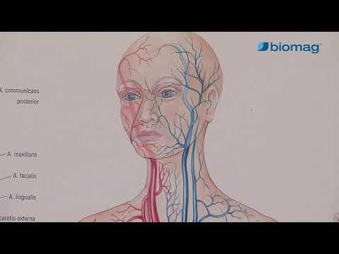 Folyékony kollagén mellékhatásai