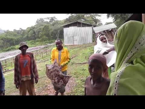 We are Coffee Farmer (Ethiopia, 2011)
