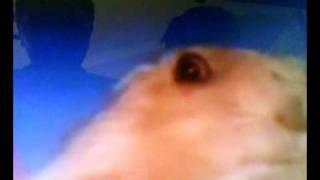 dramatic chipmunk overwatch - TH-Clip