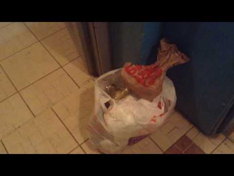 Что делать если соседи оставляют мусор в общем подъезде?