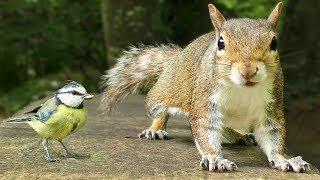 Videos Para Gatos - Pequeños Pájaros y Ardillas