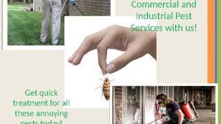 Pest Control Brisbane | Ace Pest Control