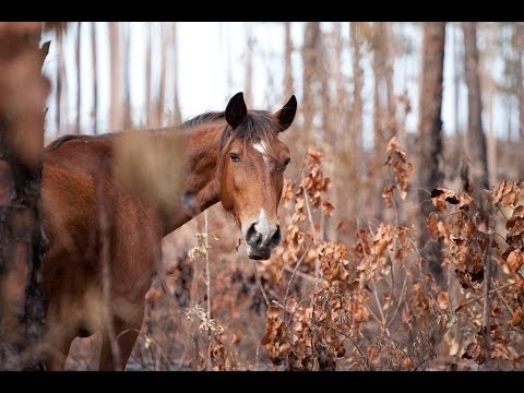 The Most Endangered Wild Horse In The World Straight