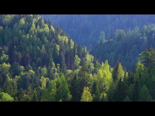 Иркутская область станет приоритетной территорией федерального плана проведения лесоустройства