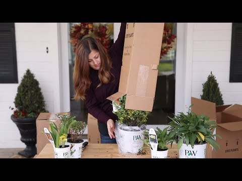 Plant Unboxing from Proven Winners 📦🌿// Garden Answer