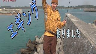 【エギング】イカ釣りしてみた【次回予告もみてにー】