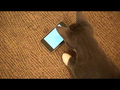 Watch This App Transform Kitteh Into iPod Killer