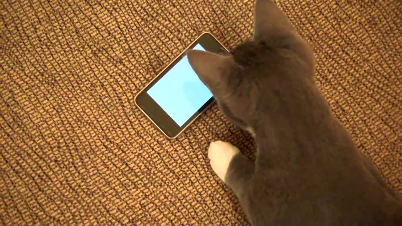 Watch This App Transform Kitteh Into iPod Killer