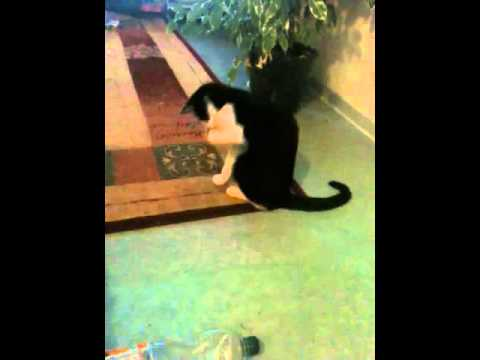 Katze spielt mit Armreifen