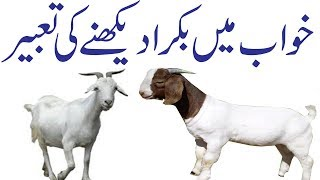 Khwab Mein Qurbani ka Bakra & Bakri Dekhna| Got Meaning of
