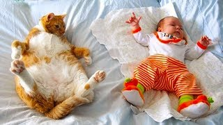 Funny Cats Meeting Newborn Babies|  Funny Pets Video Compilation - Video Youtube