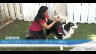 How To Prepare A Dog For Therapy Dog Training