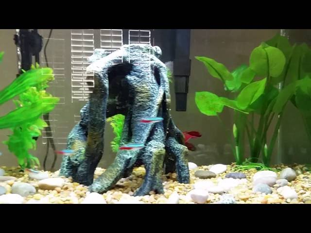 10 gallon Betta Fish Tank