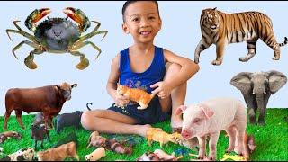 Bé Nhật Nam và đồ chơi các con vật, đồ chơi động vật cho trẻ em, Bông Kids TV