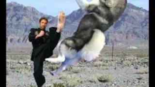 you kicked my dog -adam sandler