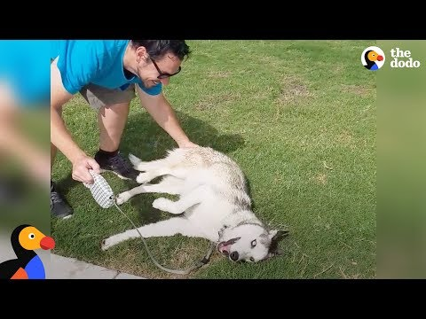 Stubborn Dog Refuses To Leave the Park   The Dodo