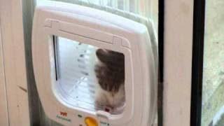 How can i train my cat to use the catflap