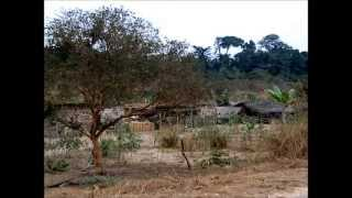 preview picture of video '2004 - Um dia na Mata do Maiombe, Cabinda.'
