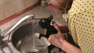 Kotka Aszka - kąpiel ratująca jej życie. Debile wrzucili kota do smoły!!!