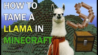How to tame a LLAMA in Minecraft: Xbox one!