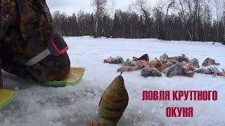 Покажи зимнюю рыбалку на окуня