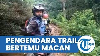 Detik-detik Pengendara Trail Bertemu Macan di Jalur Off Road, Ada yang Panik Meninggalkan Motornya