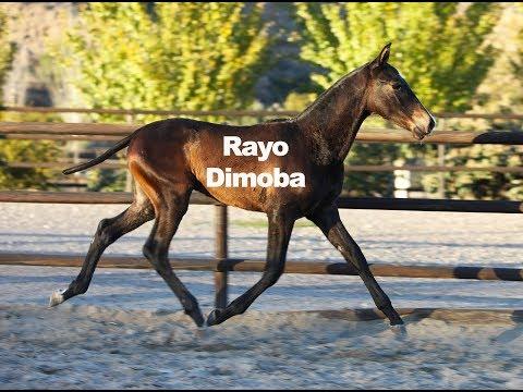 Rayo Dimoba (Publicado 3-12-2018)