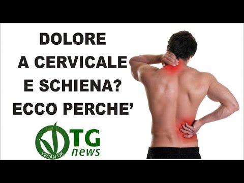 Osteochondrosis non una proposizione di fb2