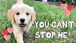 """""""You Can't Stop Me"""" - Original Song"""