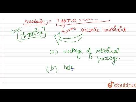 Protozoai paraziták és ezek kezelése