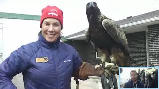 Nature Chat Introduces a Golden Eagle