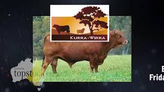 Kurra-Wirra Barcaldine Bull Sale - Friday 23rd February 2018