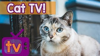 Cat TV - Best Videos for Cats with Calming Music and Nature Sounds - 9 Hour TV for Cats playlist