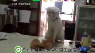 興奮している犬を落ち着かせるスキルがすごい猫StagerLiveステージャーライブStagerLive